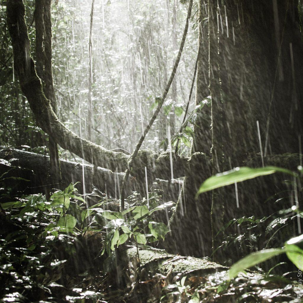 Forêt humide