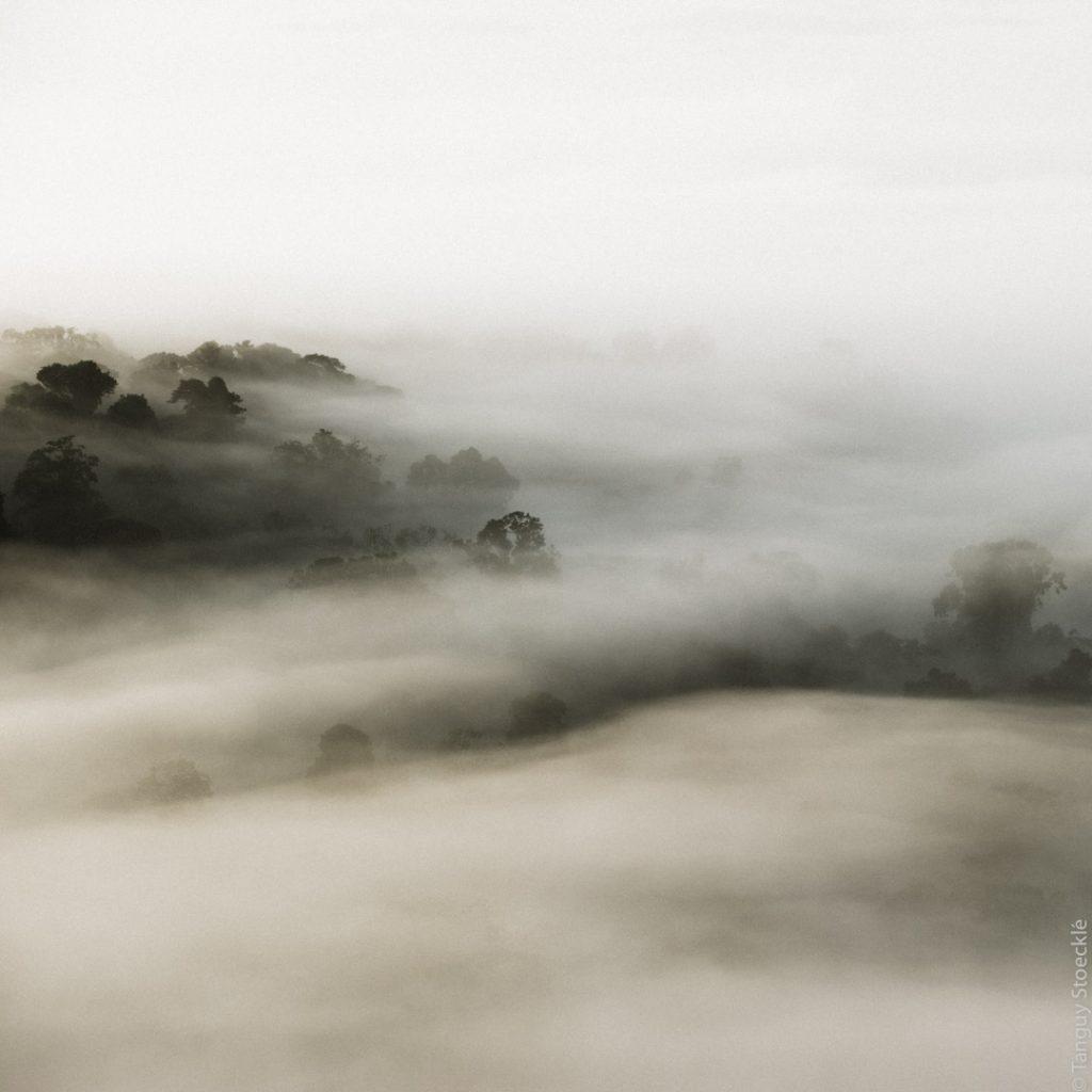 Brumes matinales sur la forêt des Nouragues