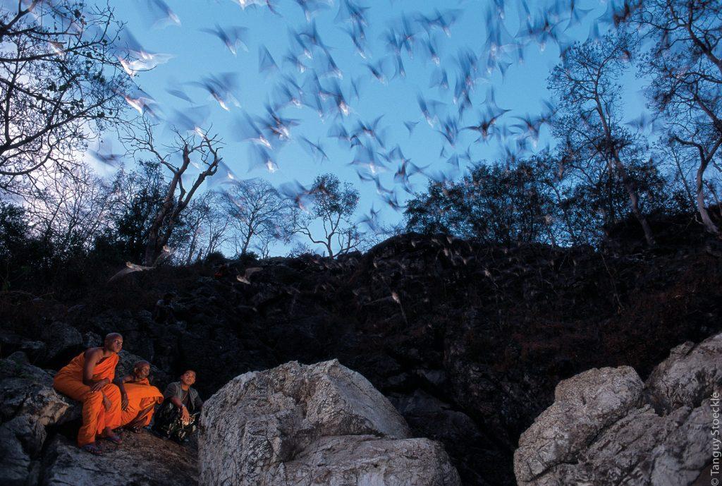 Monks protecting bats_Thaïlande