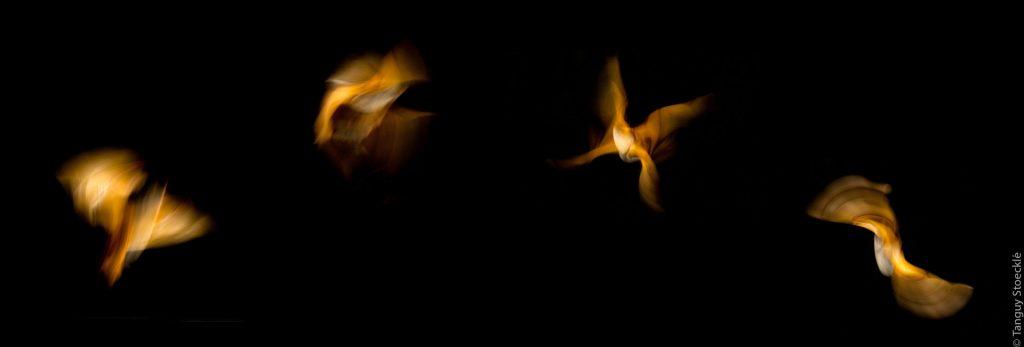 La chauve-souris aux ailes d'or. Photos Tanguy Stoecklé