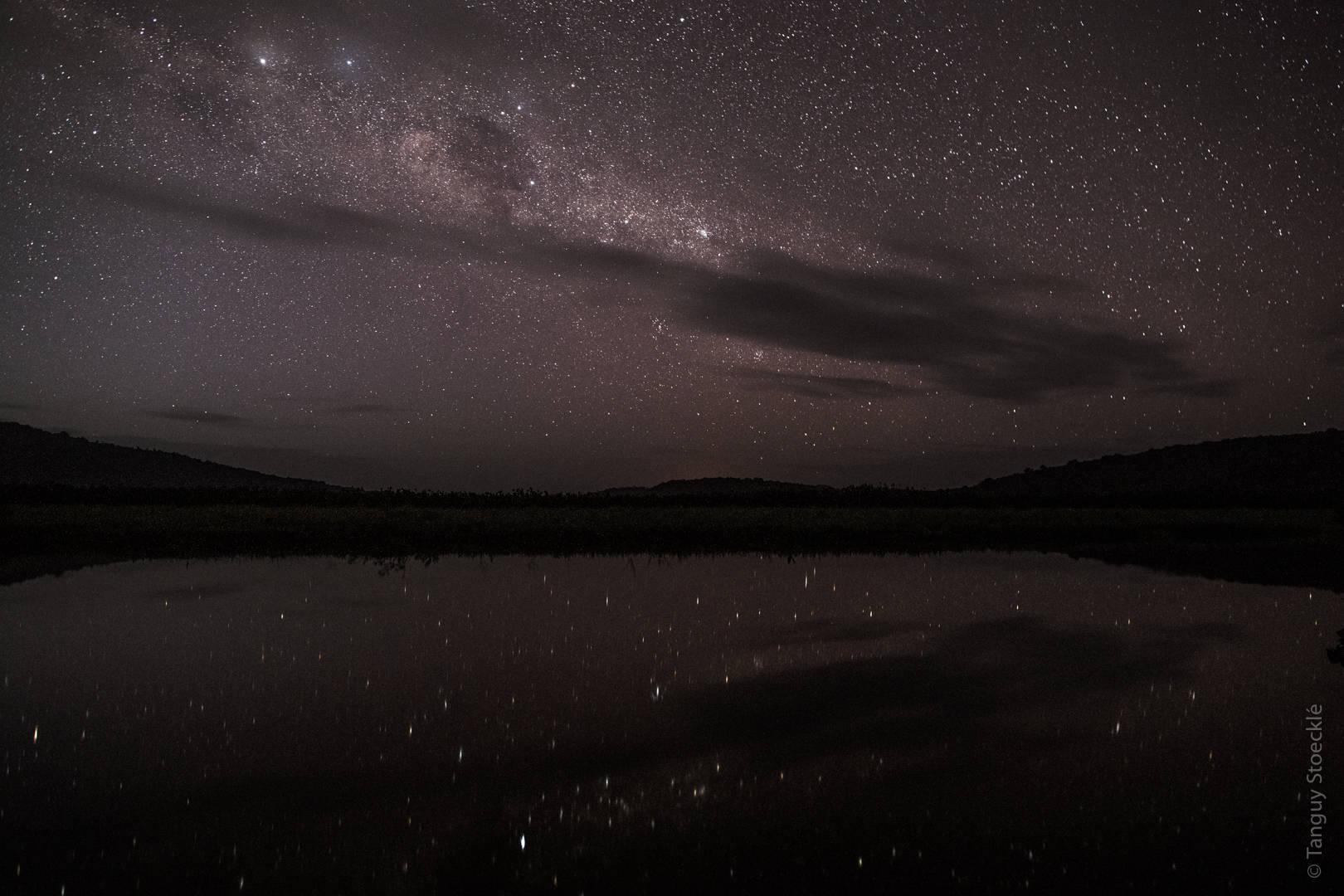 Noctilio… et la chauve-souris pêcha sous les étoiles… exactement !
