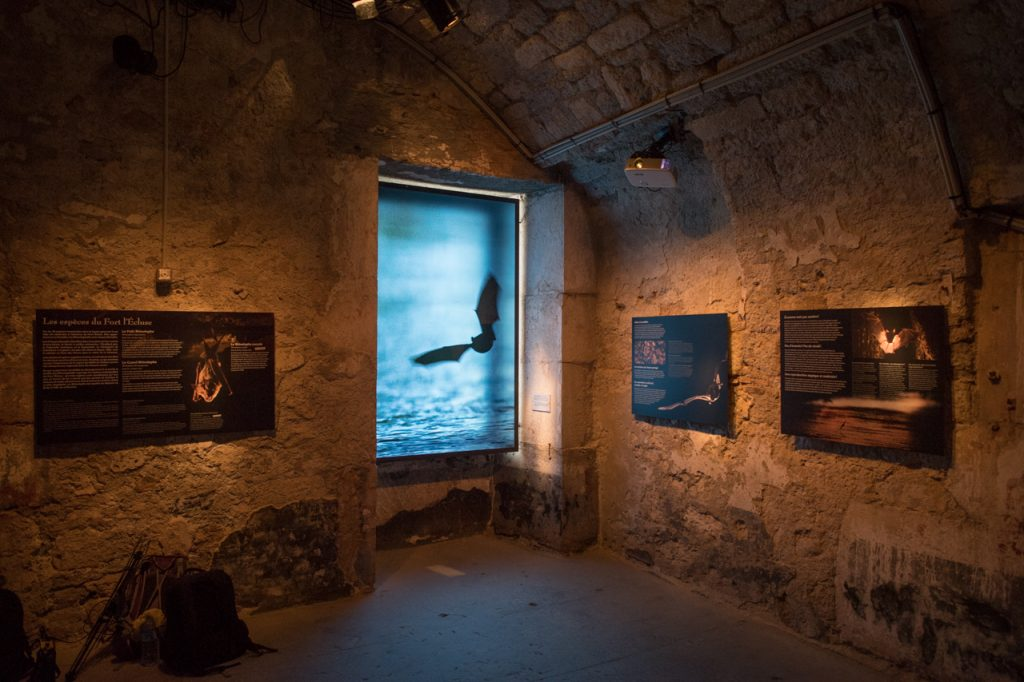 Exposition sur les chauves-souris avec les photos et films de Tanguy Stoecklé